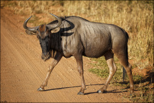 GNU on the road